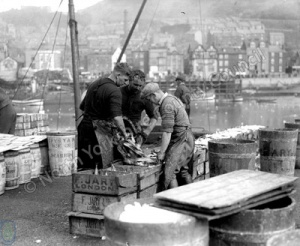 Fish Packing in Scarborough Harbour
